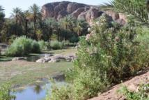 El oasis de Errachidia