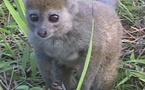 El paraíso de los lémures en Madagascar