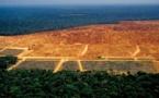 Noruega recortará drásticamente su ayuda a la protección de la selva amazónica