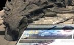 El anquilosaurio se defendía con un camuflaje especial