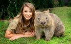 ¿Cansado de los videos de gatos? Mejor probar con wombats y zorrillos
