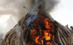 Kenia se moviliza para erradicar el comercio ilegal de marfil