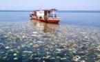 García-Herráiz: Mediterráno pronto tendrá tantos peces como plástico