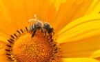 UE pospone votación sobre insecticidas dañinos para abejas