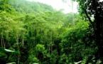 Científicos alertan sobre disminución de la biodiversidad global