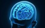 Investigadores descifran la causa del crecimiento del cerebro humano