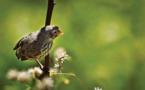 Biólogos Rosemary y Peter Grant: Aún hay esperanza para las especies