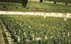 """""""Estamos preparados"""": Canadá legaliza cultivo y compra de marihuana"""