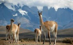 Unas 390 especies de animales en peligro de desaparecer en el Perú